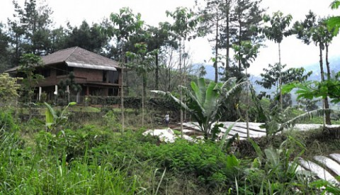 Jakarta ecology