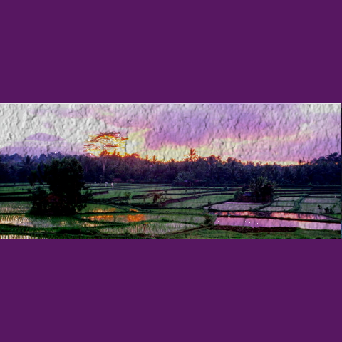 Rice paddies, like paradise, but with hell just beneath the smooth surface of the waters